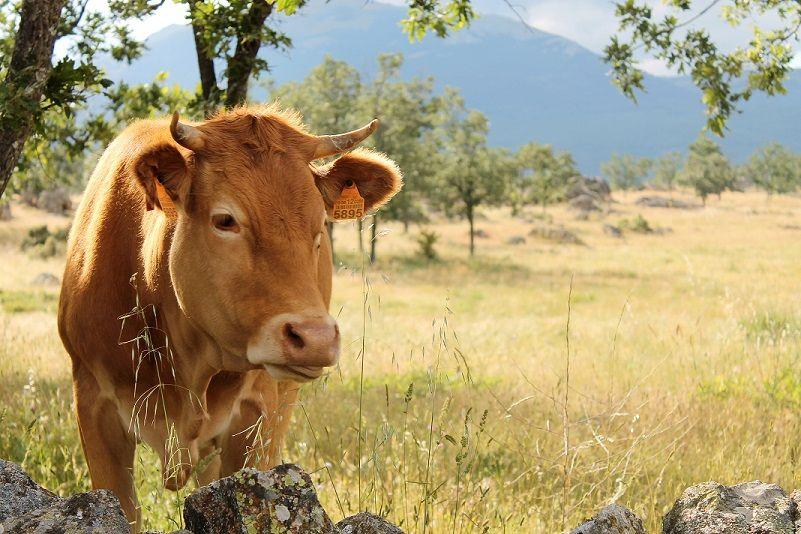El sector de la Carne de Vacuno, comprometido con la sostenibilidad